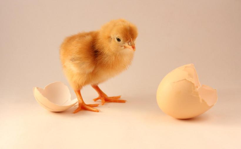 Chicken or the Egg by Ruben Alexander